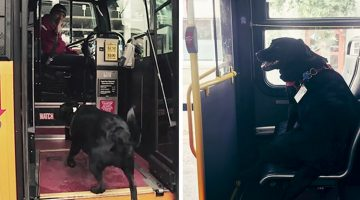 This Dog Rides The Bus Every Day All By Herself To Go To The Park