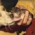 Firefighters Rushed Into Home To Discover Dog Lying On Top Of 4 Kittens To Protect Them From Fire
