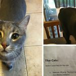 Cat-Sitter Shares The Hilarious Note She Got From The Owner