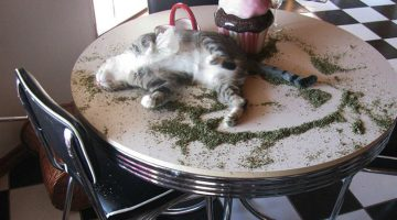 13 Hilarious Times Cats Found Catnip And Went On A Serious 'Nip Trip'
