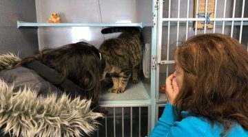 Woman Browsing Shelter's Facebook Page Spots Her Cat — Who's Been Missing 2 Years