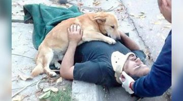 Loyal Dog Wouldn't Leave Injured Owner's Side And Hugs Him Showing Love