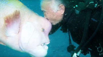 Japanese Diver Has Been Friends With The Same Fish For 25 Years