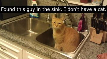 21 People Who Thought They Didn't Have A Cat. A Cat Told Them Otherwise