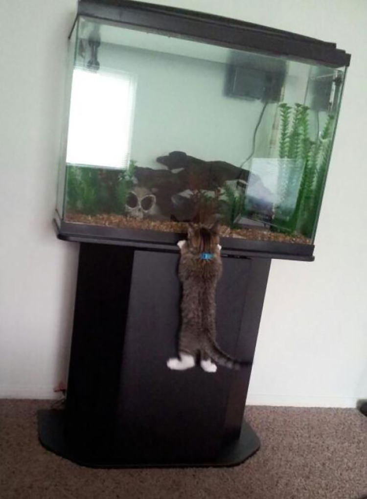 funny pictures pets caught in the act