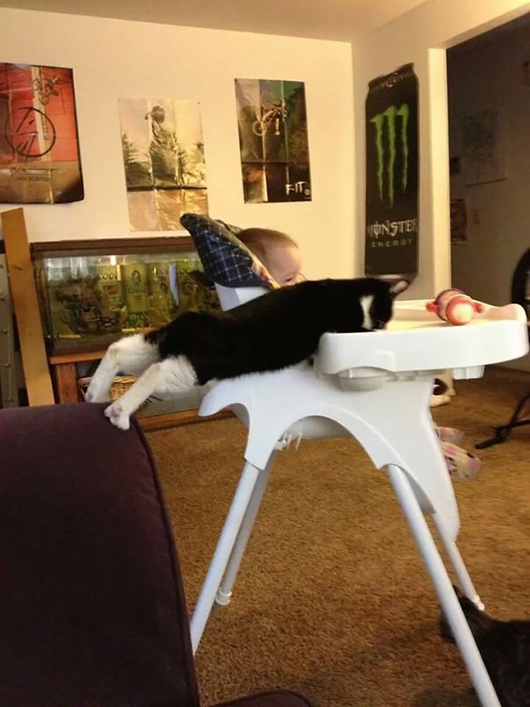 funny pictures pets caught red-handed