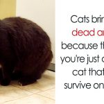 13 Awesome Cat Facts That You Probably Didn't Know