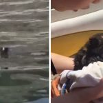 Boaters See Black Spot Moving In The Distance, Then They Realize It's A Tiny Kitten Crying For Help
