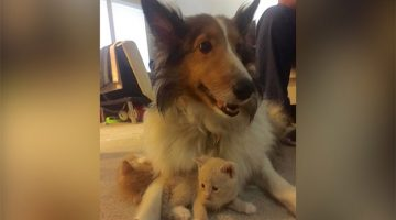 Dog Ignored Stray Cat Her Family Adopted, But Then She Had Kittens