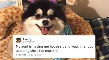 Woman Writes Hilarious List Of Rules For Dog Sitter, And They Go Viral