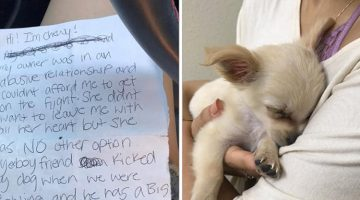 Puppy Left At The Airport With Heartbreaking Note From His Owner