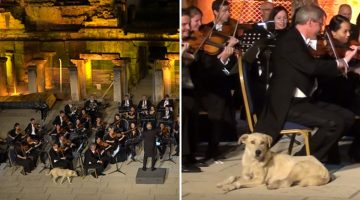 Stray Dog Walks Onstage During Concert And Gets Rounds Of Applause