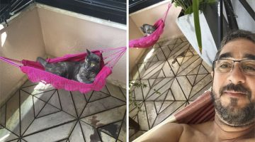 Dad Got His Cat A Tiny Hammock So They Could Relax Side By Side