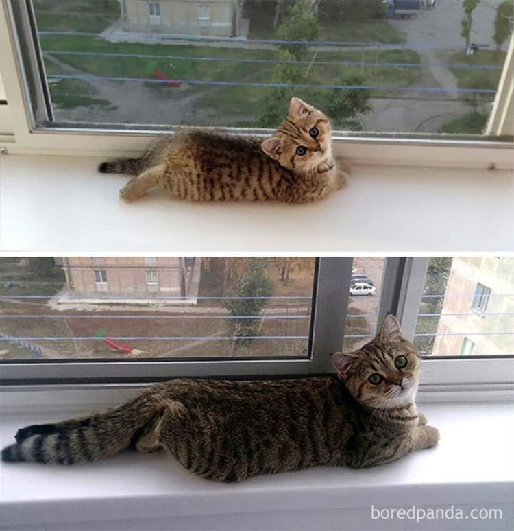cats-before-and-after-growing