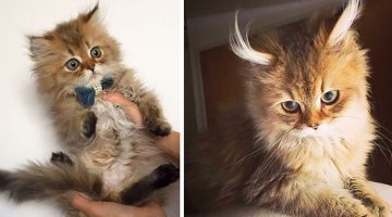 18 Adorable Before And After Pictures Of Cats Growing Up