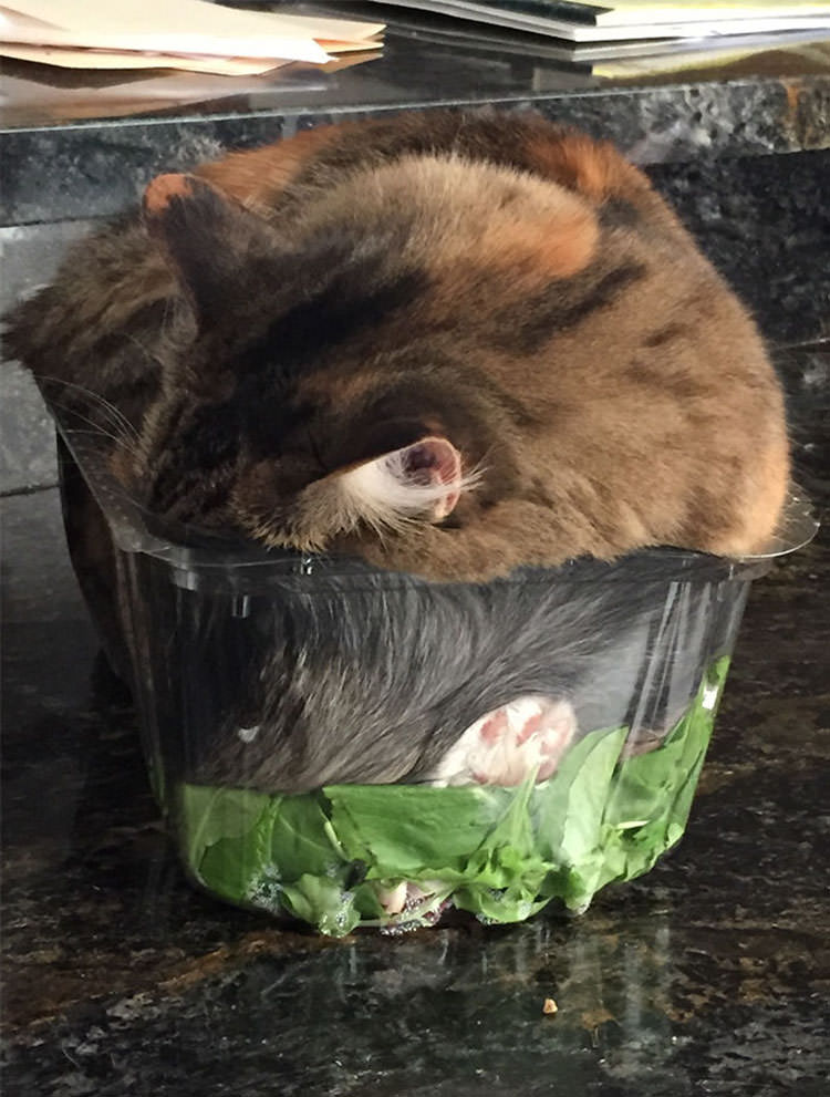 pictures if i fits i sits cats
