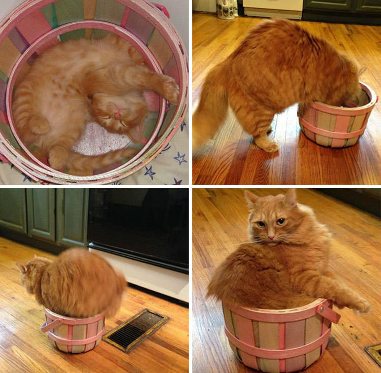 photos if i fits i sits cats