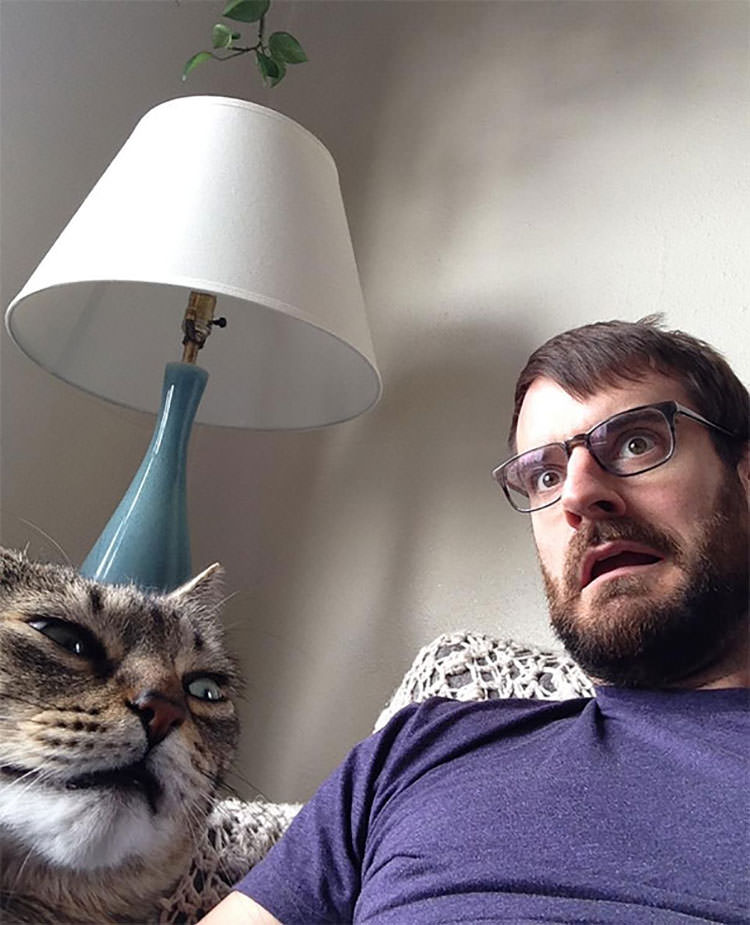 funny cats hate selfies