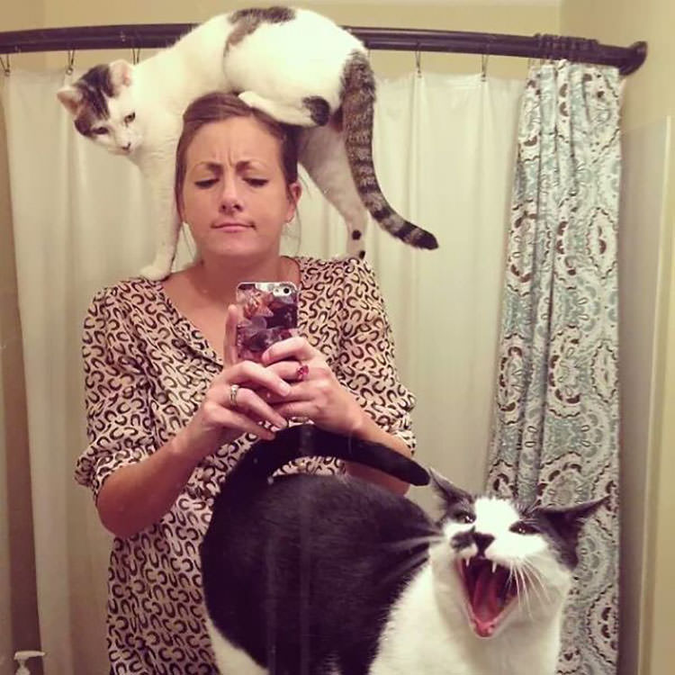 cats hate selfies
