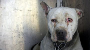 Dog That Spent Her Early Years Chained Up Can Finally Be A Puppy