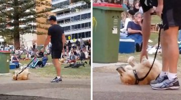 Dog Plays Dead So She Doesn't Have To Leave The Park (Video)