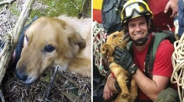 Dog Stranded For Days On Side Of Cliff Gives Kisses To All Her Rescuers After They Saved Her Life