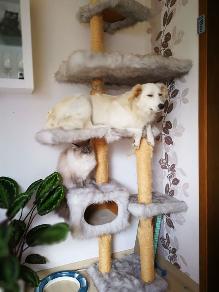 dogs think they are cats