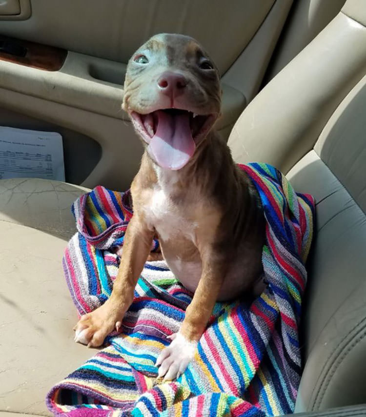 happy puppy foster home wagging tail