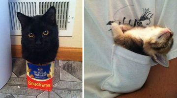 If It Fits, I Sits: These 17 Cats Prove That No Space Is Too Small