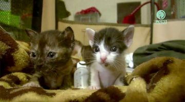 Tiny Rescue Kittens And Baby Squirrel Get All The Love They Need!