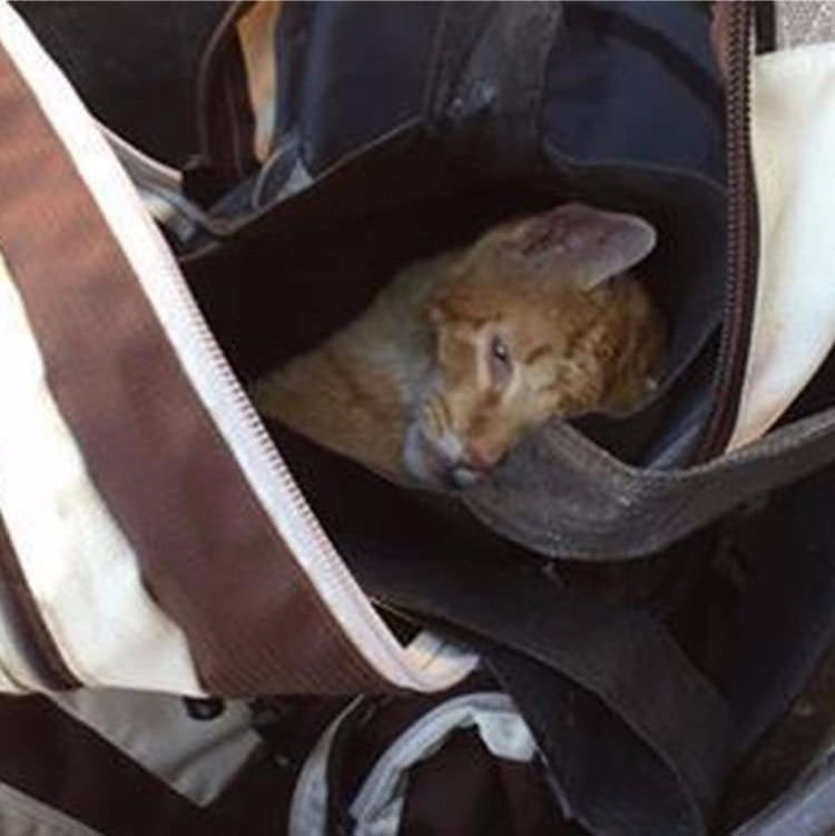 rescue-cat-backpack