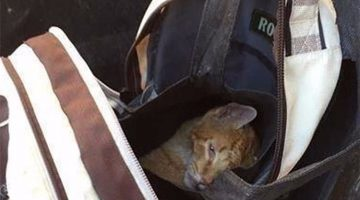 Cat Found Abandoned In A Backpack Can't Stop Thanking His Rescuers