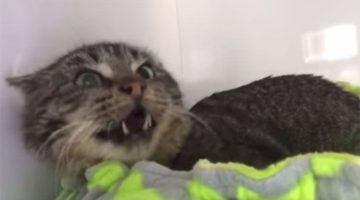 'Aggressive' Rescue Cat Meets Foster Kittens, Then Everything Changes