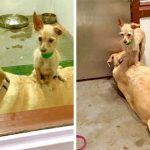 Tiny Shelter Dog Won't Leave His Best Friend's Side To Make Sure They're Adopted Together