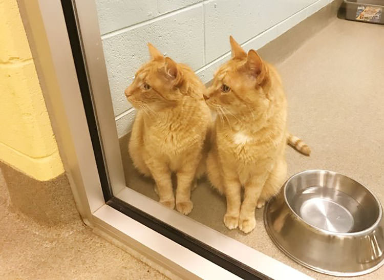 senior cat brothers adopted