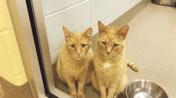 Couple Went To The Shelter To Adopt One Cat, But Then They Saw These Guys
