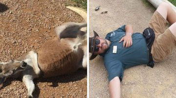 These Zookeepers Had Too Much Time On Their Hands, So This Happened (13 Pictures)