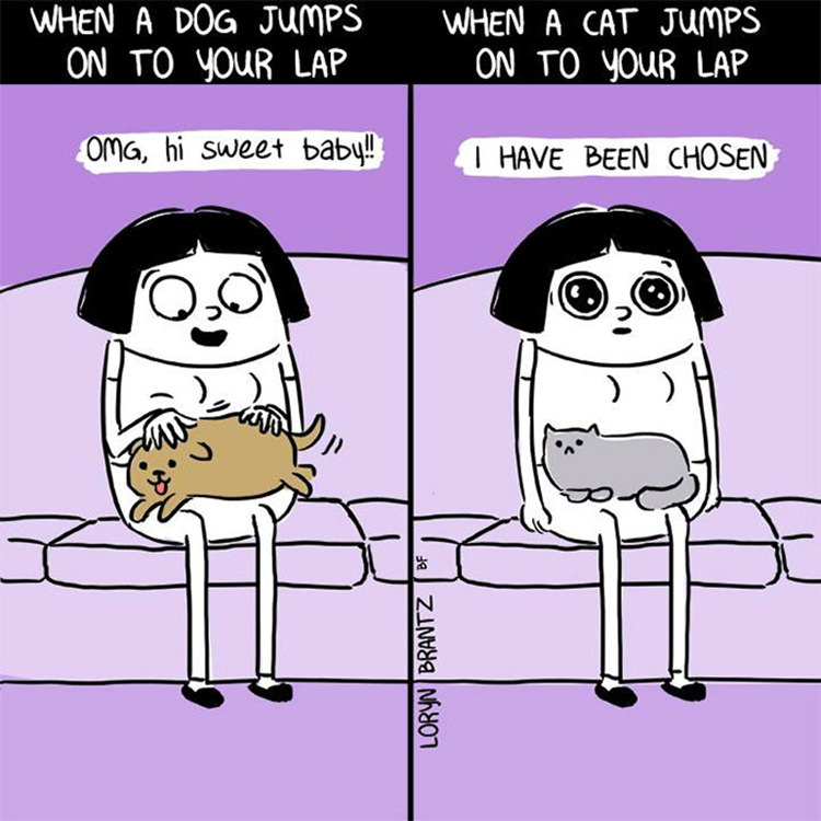 13 funny comics that show the differences between dogs and cats top13