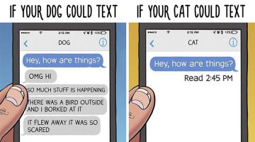 13 Funny Comics That Show The Differences Between Dogs And Cats