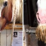 In Case You Didn't Know… Horses Can Actually Grow Mustaches