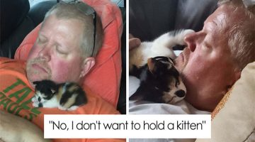 13 Times Humans Said They Didn't Want A Cat And Ended Up Loving Them