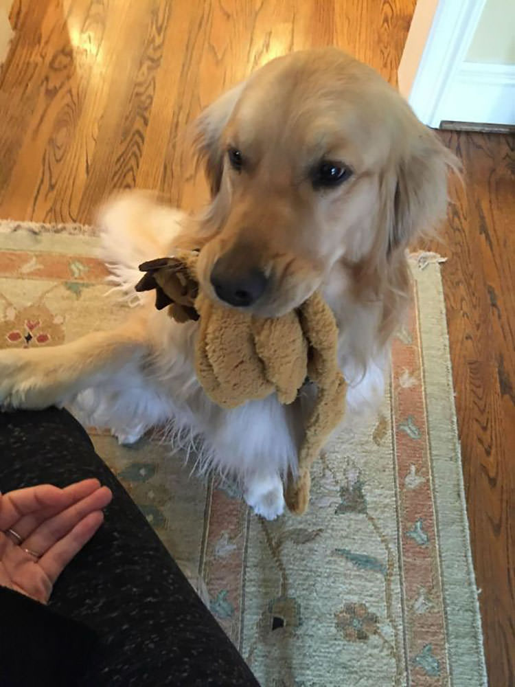 pets bring unexpected gifts