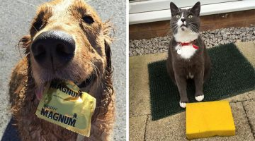 21 Of The Most Unexpected Gifts Pets Brought Their Owners