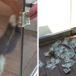 Office Kitty Likes Money So Much He's Stealing It From Strangers
