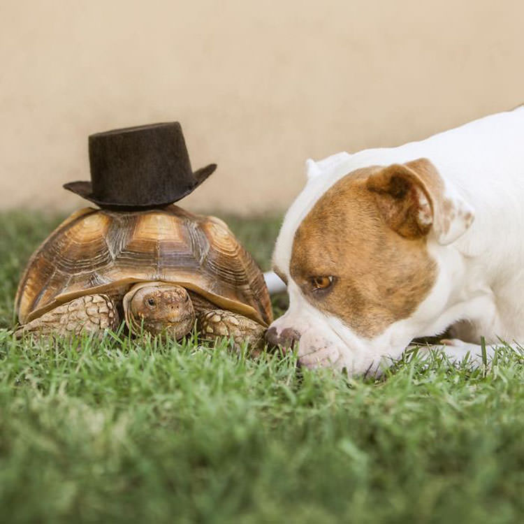 rescue dog tortoise friends