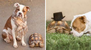 This Unusual Friendship Between A Rescue Dog And A Tortoise Is The Sweetest Thing You'll See Today