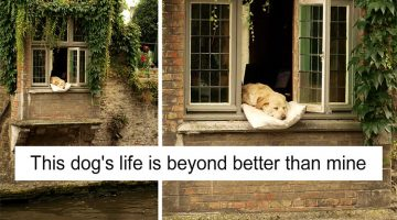 13 Spoiled Dogs That Have Better Lives Than Most Humans