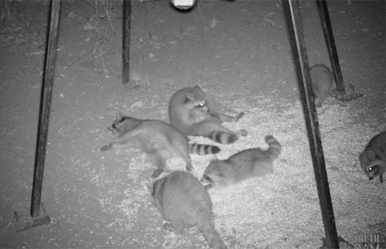 13 Times Animals Were Caught By Hidden Cameras Doing The
