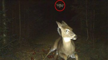 13 Times Animals Were Caught By Hidden Cameras Doing The Funniest Things