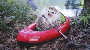 Little Hedgehog Loves To Go Camping And Has All The Tiny Tools To Match His Size